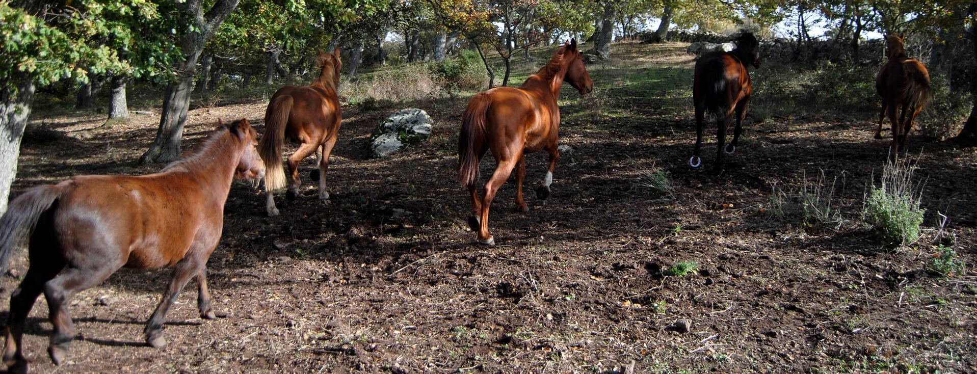Agroturismo Ruspina en Nulvi