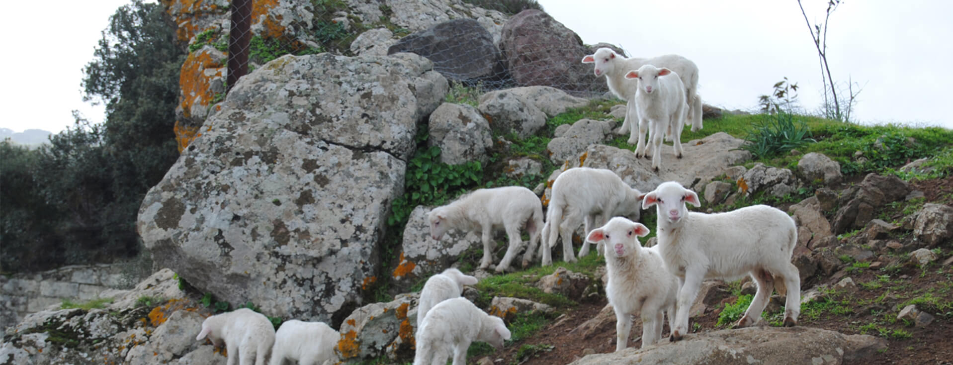 Bauernhof Ruspina in Nulvi